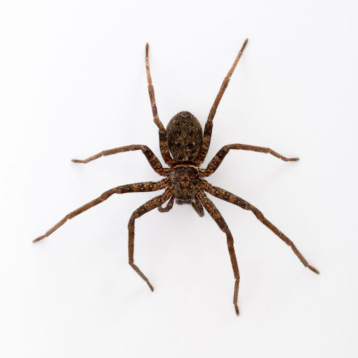 Spider Spirit Animal Totem Meaning