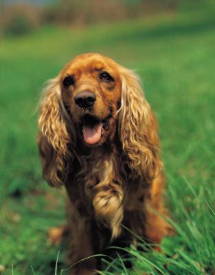 Adopting a dog may require a 15- to 20-year commitment to its care.