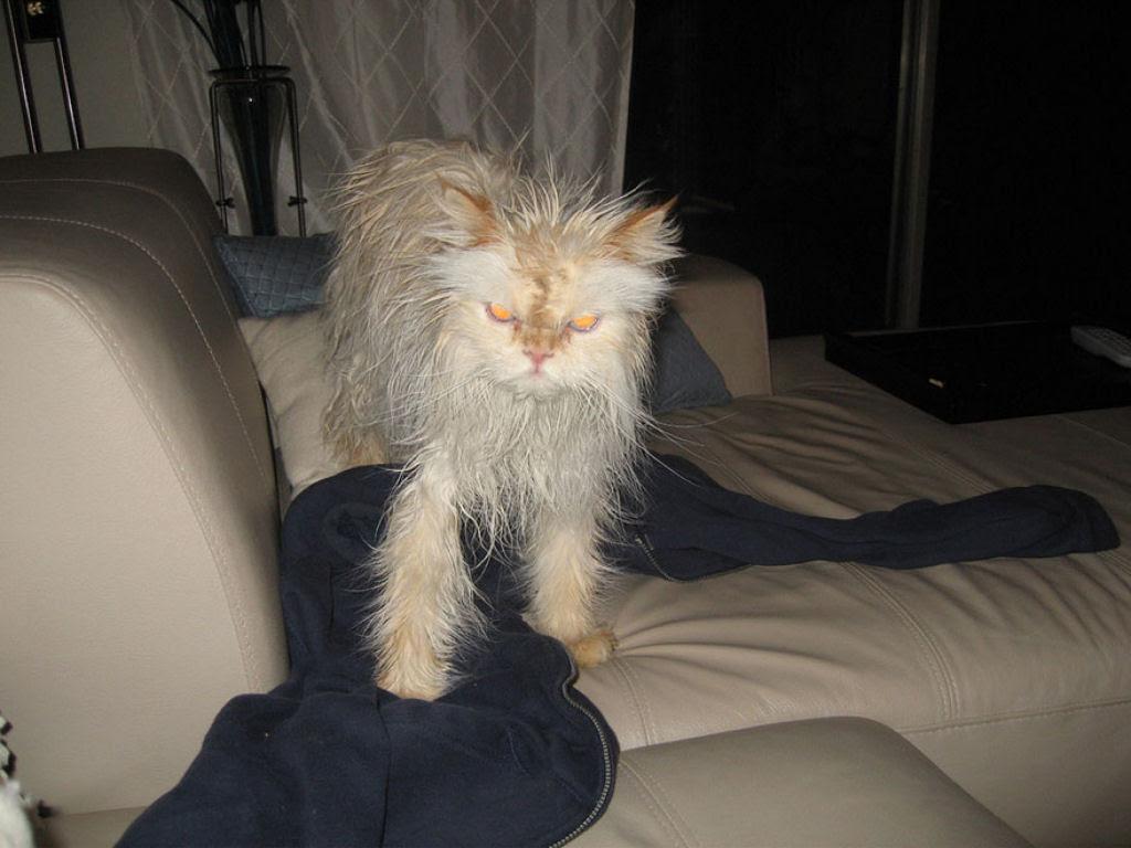 Fotografias engraçadas de gatos tomando banho 22