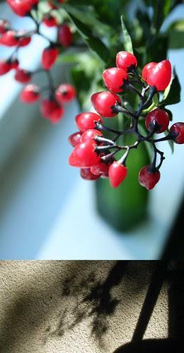 Berries in the sun