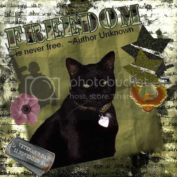Miss Diamond,House Panther,Domestic Cat,Armed Forces