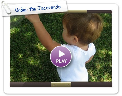 Click to play this Smilebox slideshow: Under the Jacaranda