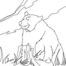 Dibujos Para Colorear Oso Kodiak Eshellokidscom