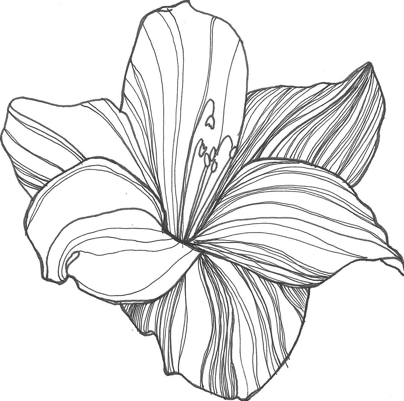 Free Flower Drawing Download Free Clip Art Free Clip Art On Clipart Library