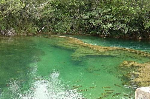 Rio de águas cristalinas em Bonito Mato Grosso do Sul
