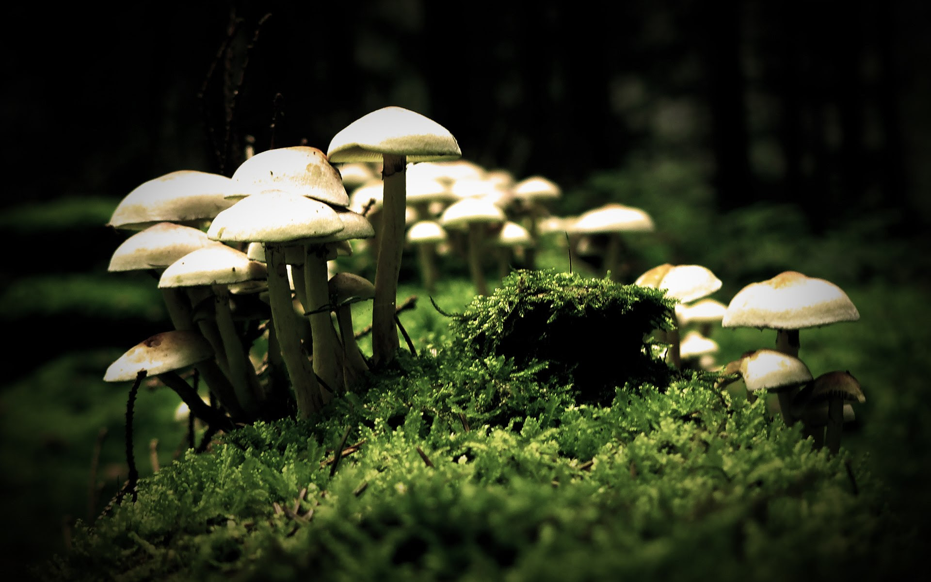 Cool Mushroom Wallpaper Groundcontroltradingcom