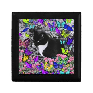 Freckles in Butterflies II - Black White Tux Kitty Gift Box