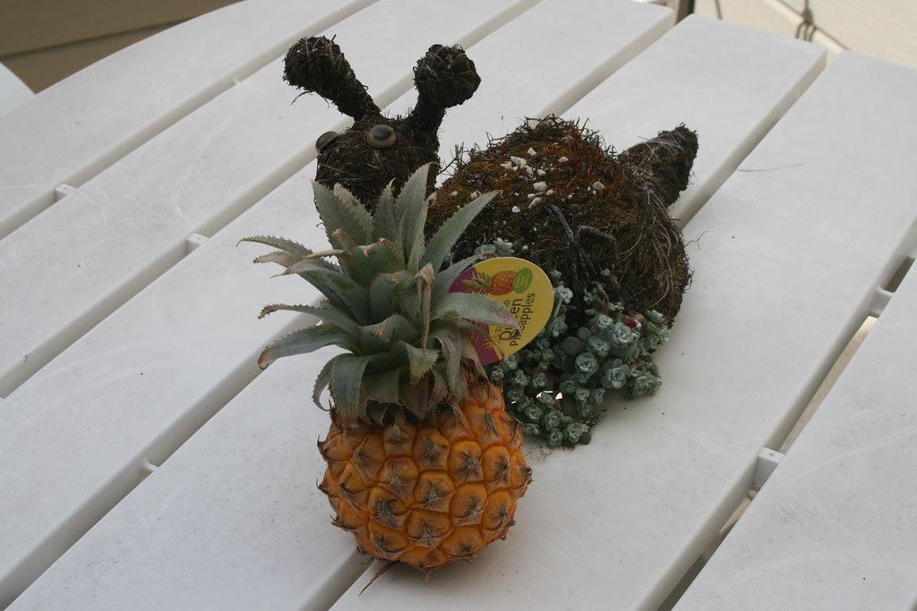 Queen of Pineapples