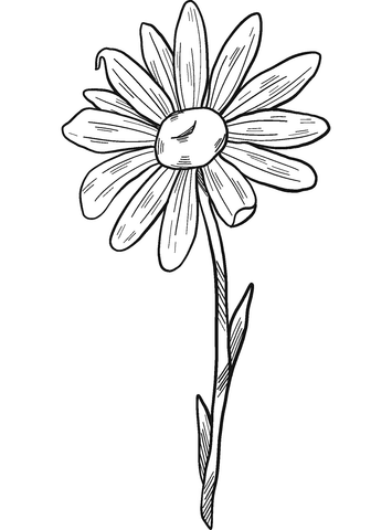 Daisy Coloring Page Free Printable Coloring Pages