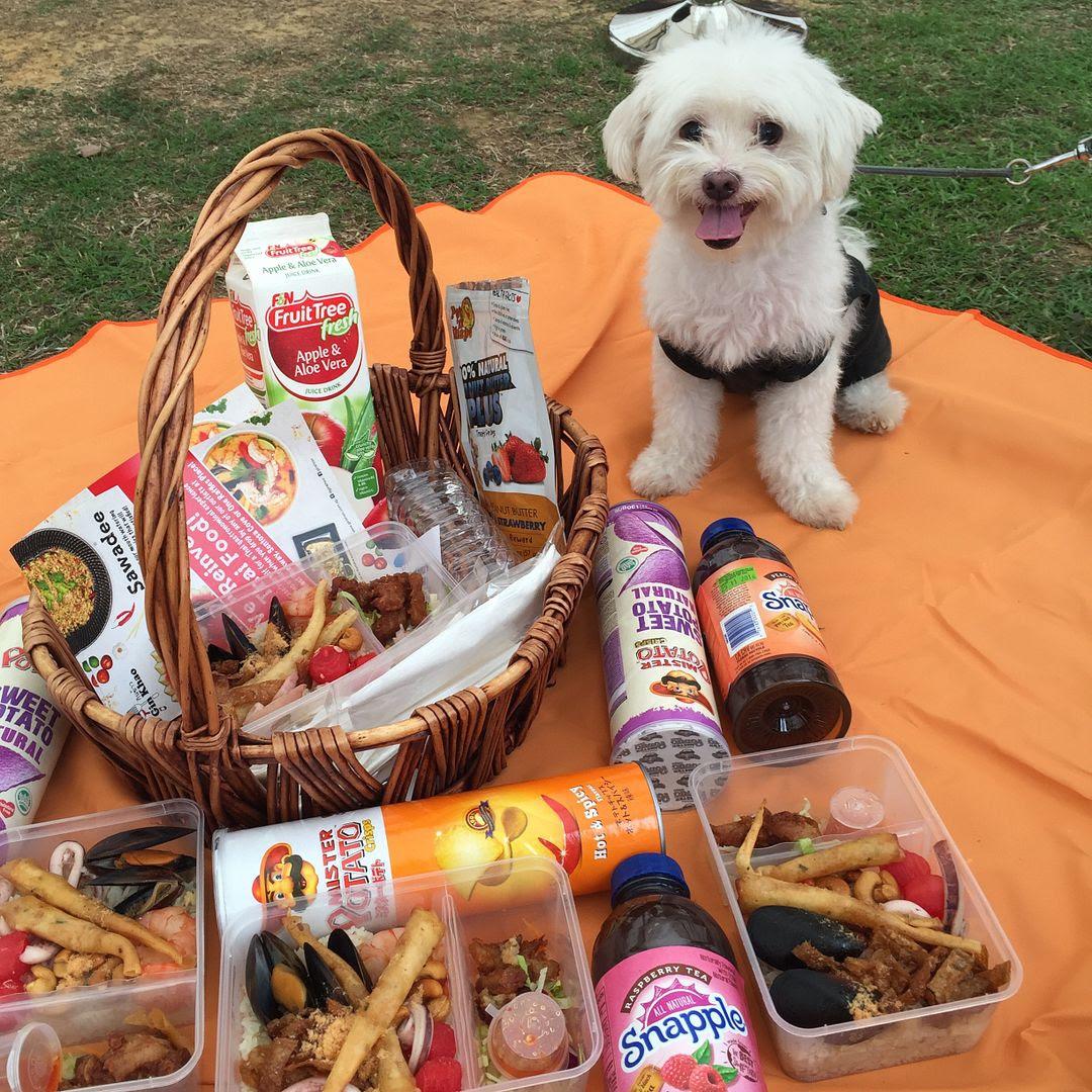 photo Pets Picnic 2016 17.jpg