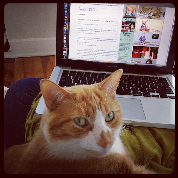 Auggie's helping me catch up on my blog reading.