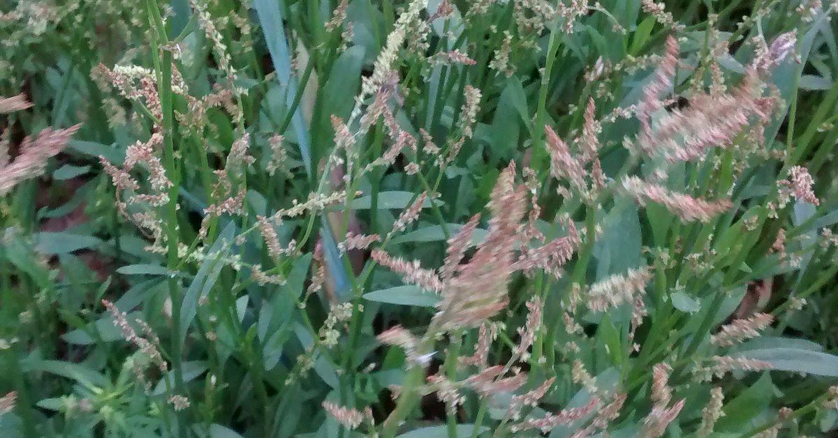 Weeds in flower beds | Hometalk
