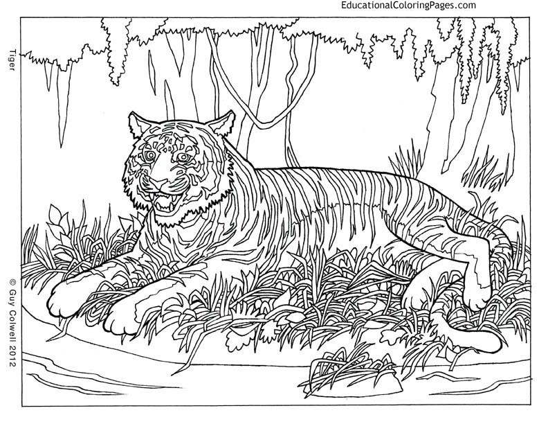 Animal Coloring Pages For Adults  AZ Coloring Pages