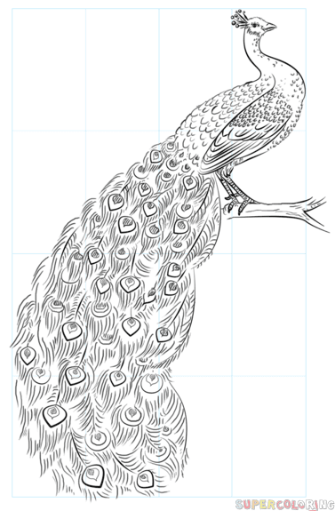 Cómo Dibujar Un Pavo Real Step By Step Tutorial De Dibujo