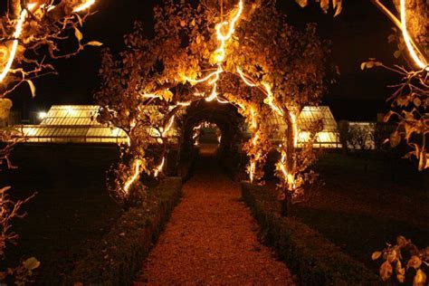 The fairy lit pear tree archway in the Victorian walled