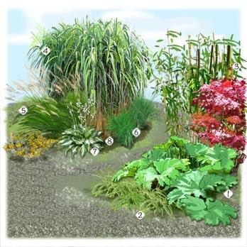 Plantes Faciles  Entretenir  Conseils Prix Et