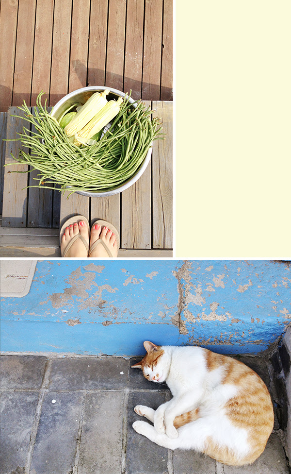 China- huge green beans + happy cat