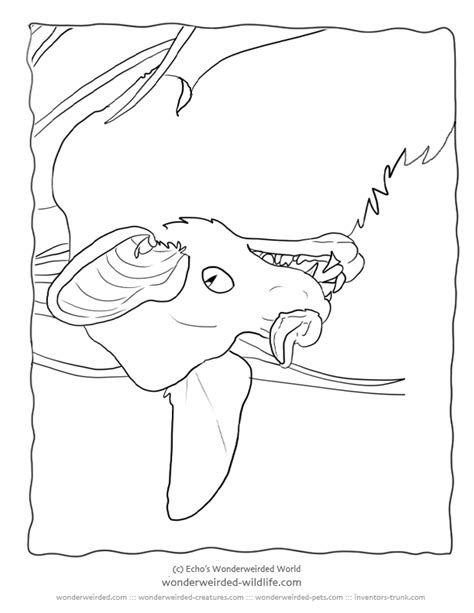 animal false coloring examples sketch coloring page