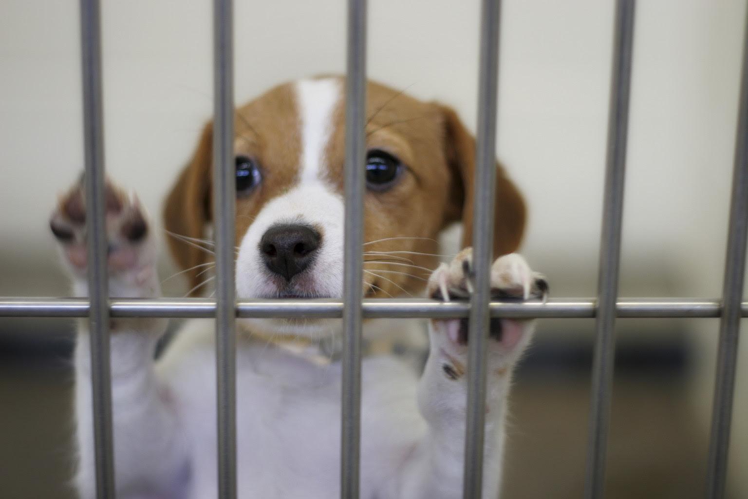 Michigan Animal Shelter Gas Chamber Ban Bill Passes State Senate  HuffPost