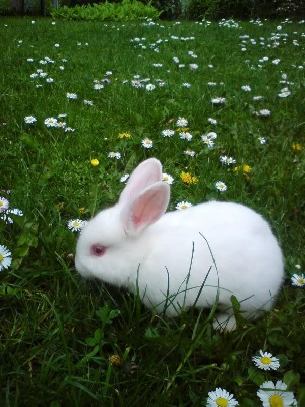 Sammy's bunny