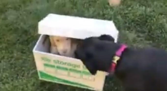 Perrita no puede controlar su emoción al descubrir en una caja al nuevo miembro de la familia