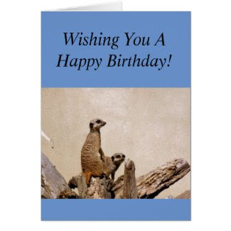 Meerkats Happy Birthday Greeting!