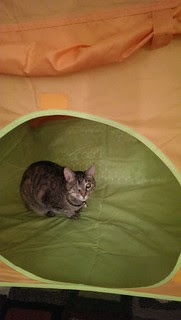 Maggie in the kids' tent