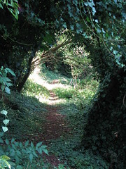 A path through the nature reserve