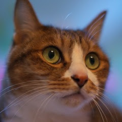 猫の日2011_2