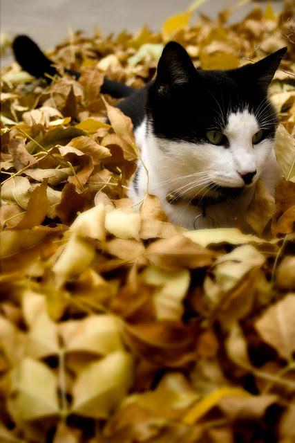 Leaf Sitting