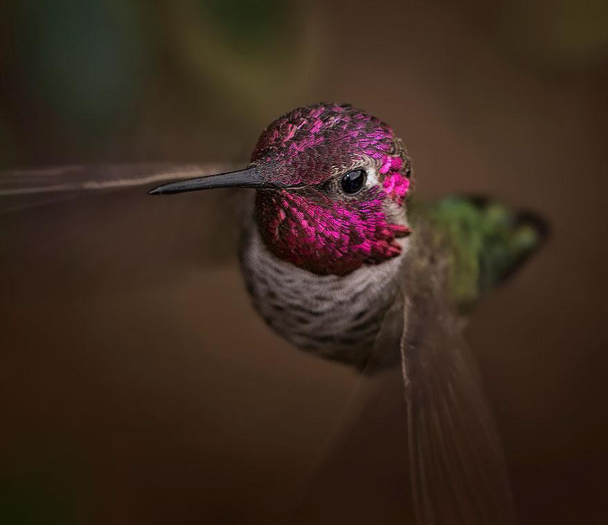 cute-beautiful-hummingbird-photography-10