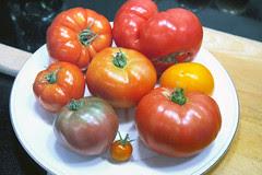 tomato taste test 3
