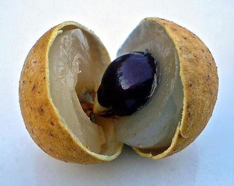 Một quả nhãn bóc vỏ, lộ cùi và hạt
