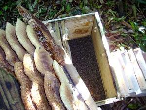 Apicultor perdeu cerca de 90% de seu apiário (Foto: Eduardo Perez/Arquivo Pessoal)
