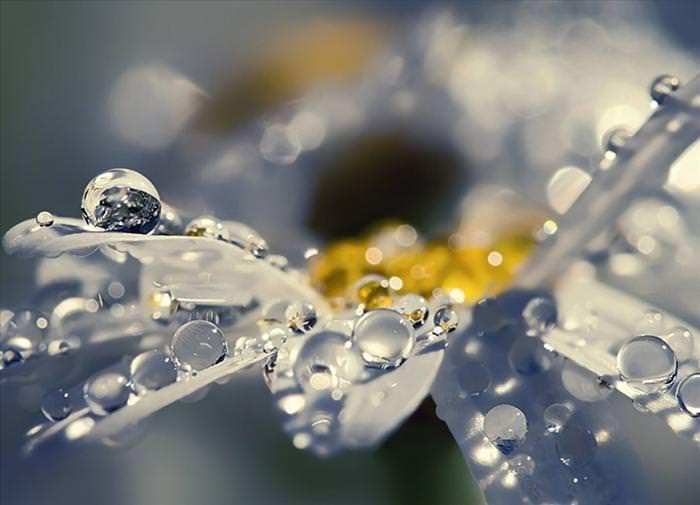 A Beleza das Flores Após a Chuva