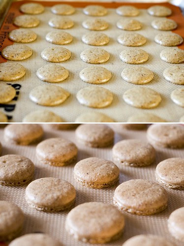 espresso hazelnut macarons