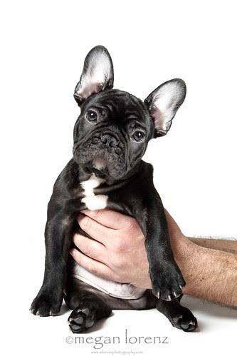 Cutest Puppy Ever by Megan Lorenz