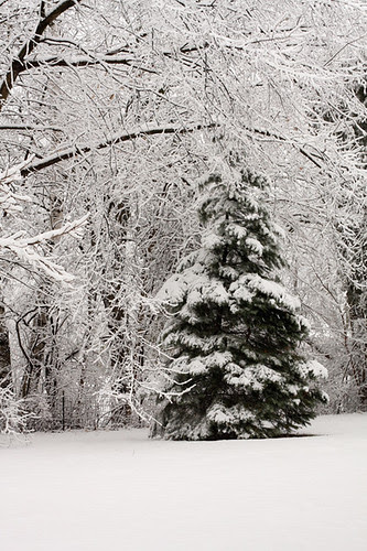 Wintery Wisconsin by jenib320