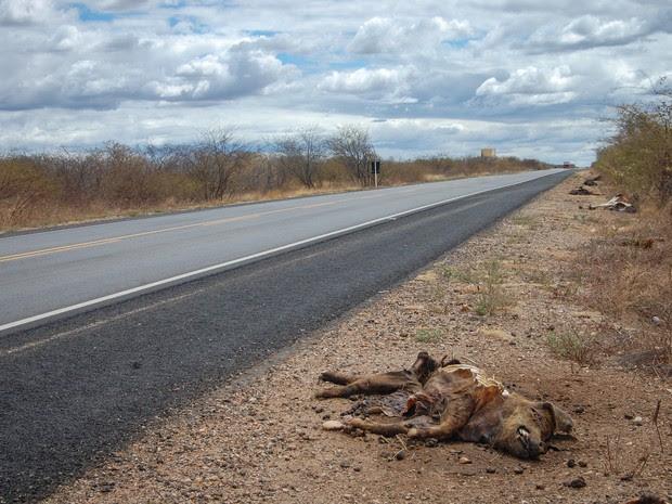 Animais mortos vítimas da seca no sertão paraibano, na rodovia BR 230 (Foto: Diogo Almeida/G1)