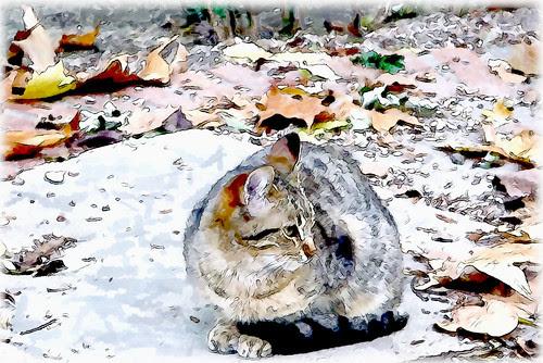 un gato rodeado de otoño