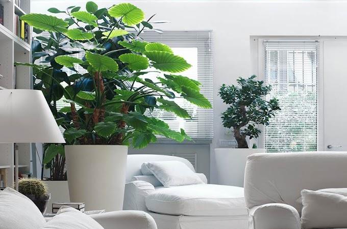 Αυτοί οι λόγοι που θα σας πείσουν να βάλετε φυτά μέσα στο σπίτι σας