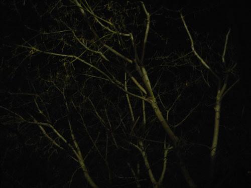Trees at Night _ 9262