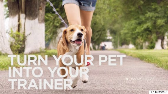 own ownshow 10 minute workout pet