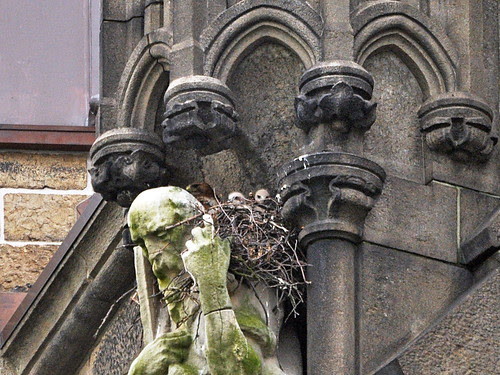 First Look at Cathedral Nestlings