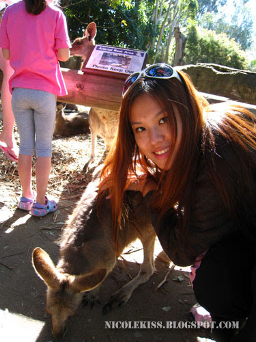 me patting wallaby