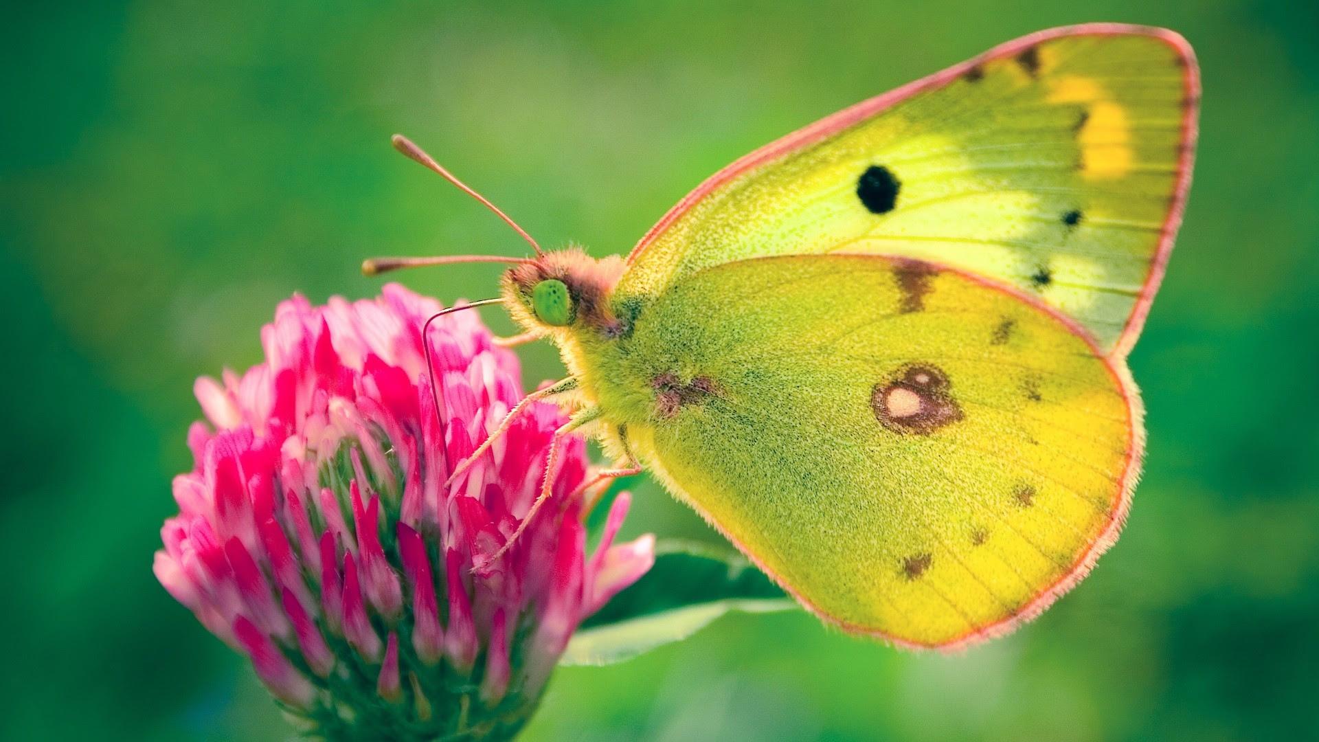 Butterfly Desktop Backgrounds (52+ images)