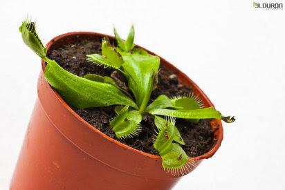 Cuidados plantas de interior. Nutrientes