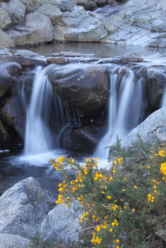 Floral Stream