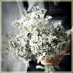Veg - Fresh Oregano Bouquet