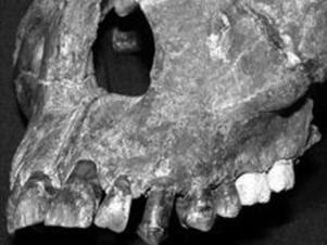 Fóssil da face de um jovem que viveu a 1 milhão de anos foi encontrado pelos pesquisadores Foto: Ploss One / Reprodução